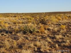 Near Grand Canyon. West Rim. Desert (2)