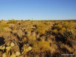 Near Grand Canyon. West Rim. Desert (4)