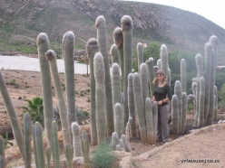 Near Los Christianos. Cactus park (16)