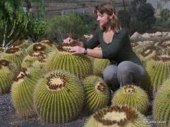 Near Los Christianos. Cactus park (19)