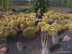 Near Los Christianos. Cactus park (2)