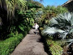 Puerto de La Cruz. Botanical garden (2)