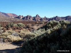 Teide National Park (3)