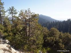 Kings Canyon National Park (14)