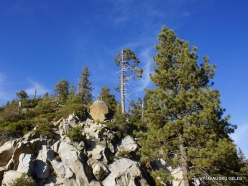 Kings Canyon National Park (16)