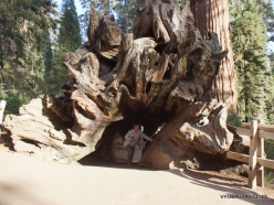 Kings Canyon National Park. Sequoia Tunnel