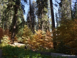 Sequoia National Park (12)