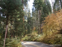 Sequoia National Park (3)