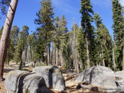 Sequoia National Park (7)