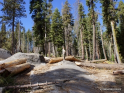 Sequoia National Park (9)