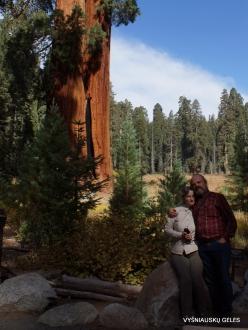Sequoia National Park. Giant sequoia (Sequoiadendron giganteum) (22)