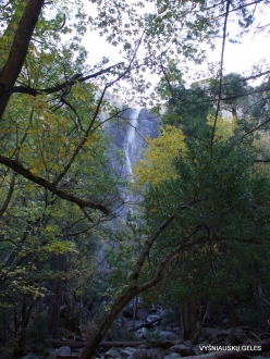 Yosemite National Park. Bridalveil Fall