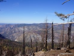 Yosemite National Park. Forest after fire