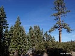 Yosemite National Park. Glacier Point (15)