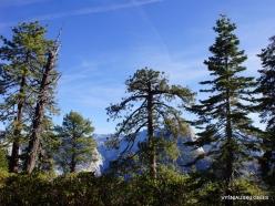 Yosemite National Park. Glacier Point (16)