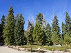 Yosemite National Park. Glacier Point (22)
