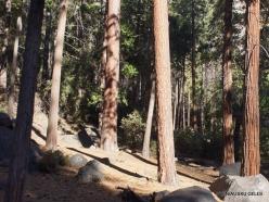 Yosemite National Park. Yosemite Valley (2)