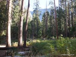 Yosemite National Park. Yosemite Valley (3)