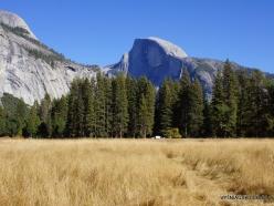 Yosemite National Park. Yosemite Valley. Meadow