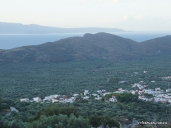 Kavoussi. Olive trees plantation