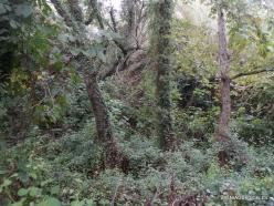 Richti Gorge (4)