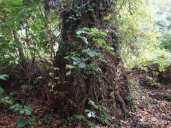Richti Gorge (8)