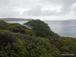 Vai Beach. Phoenicean Juniper (Juniperus phoenicea) and Lentisk (Pistacia lentiscus)