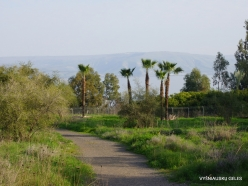 Capernaum. Sea of Galilee (Lake Tiberias, Kinneret) (6)