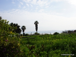Capernaum. Sea of Galilee (Lake Tiberias, Kinneret)