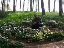 Near Gal'ed. Giv'at HaRakafot. Persian Cyclamen (Cyclamen persicum) (5)