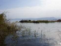 Tabha. Sea of Galilee (Lake Tiberias, Kinneret) (2)