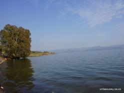 Tabgha. Sea of Galilee (Lake Tiberias, Kinneret) (4)