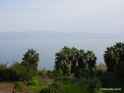Tabgha. Sea of Galilee (Lake Tiberias, Kinneret) (5)