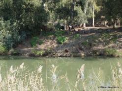 Yardenit. Jordan River (10)
