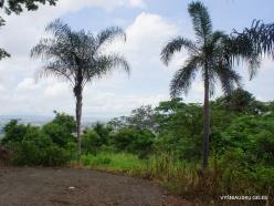 Guayaquil. Botanical garden. (15)