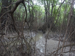 Guayaquil. Historical park. Mangrove forest (5)
