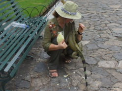 Guayaquil. Seminario park. Green iguana (Iguana iguana) (22)