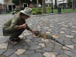 Guayaquil. Seminario park. Green iguana (Iguana iguana) (7)
