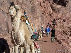 2 Mount Sinai (Gebel Musa or Mount Moses) (8)