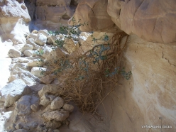 3 Near Nuweiba. Coloured Canyon (6)