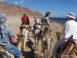 Near Dahab. With Camels (2)
