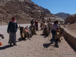 Near Dahab. With Camels (3)