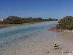 Ras Mohammed national park. Mangroves with Avicennia marina (2)