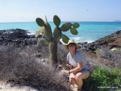 Santa Cruz Is. Playa las Bachas. Opuntia megasperma