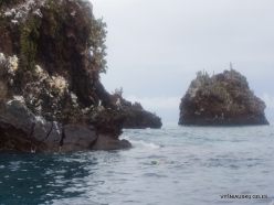 Floreana Isl. Devil's Crown. (13)