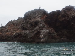 Floreana Isl. Devil's Crown. (36)