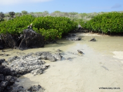 Genovesa Isl. Darwin Bay. (12)