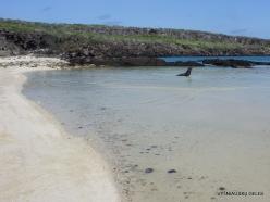 Genovesa Isl. Darwin Bay. (7)