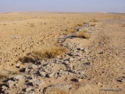 Near Tafila. Desert (2)