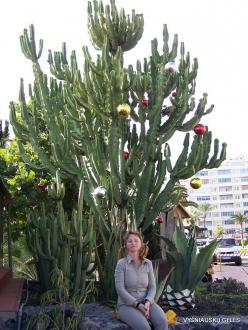 La Gomera. San Sebastián de La Gomera. Christmas Tree